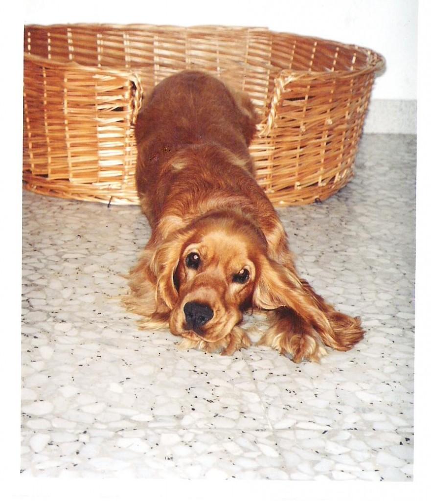 Lulu (12)